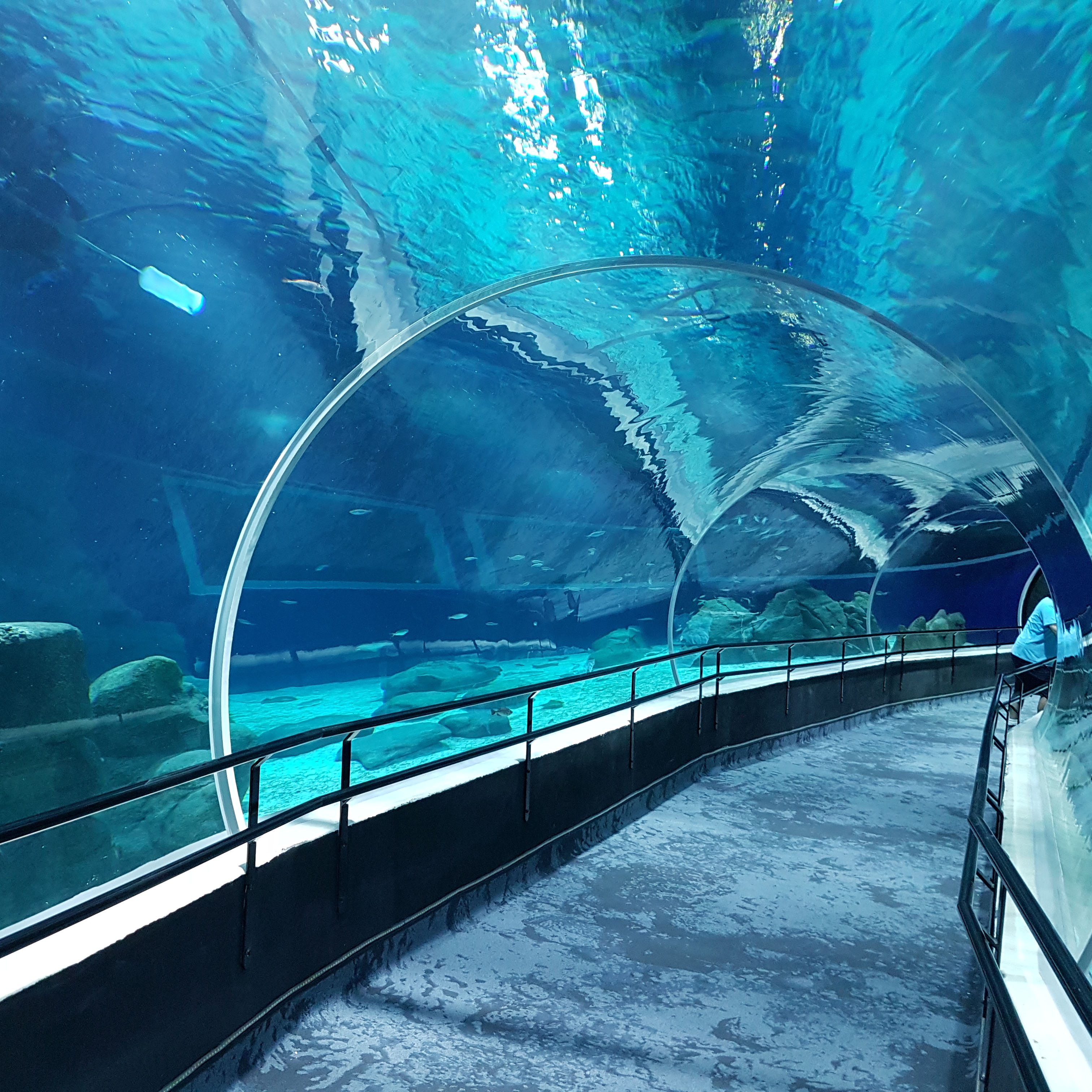 Aquario (3)